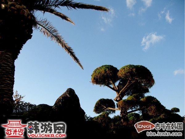 沿海是一条宽敞的大路,路边一棵棵棕榈树极像海南的椰子树,在大海的衬