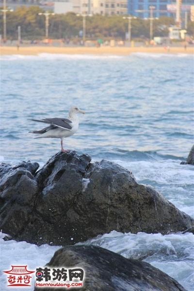 釜山海云台6