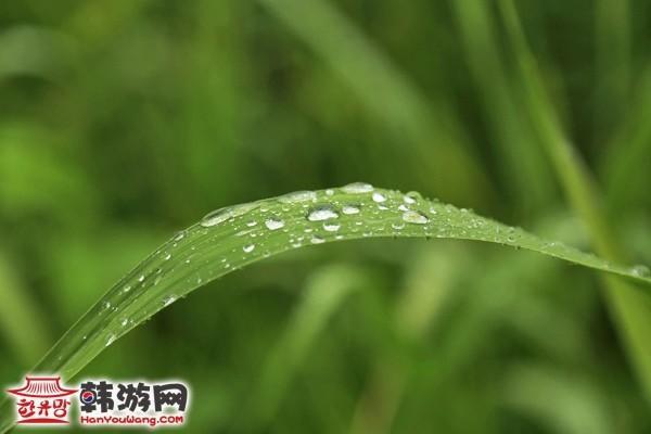杨平两水里9