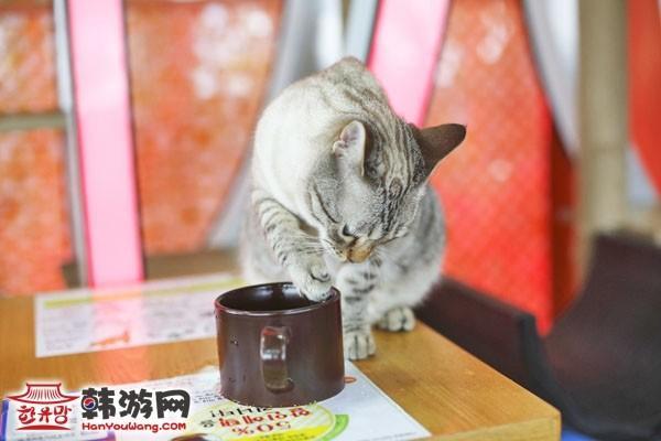 明洞猫咪咖啡厅_韩国美食_韩游网