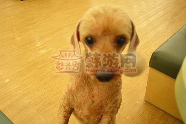 韩国BAU House爱犬咖啡厅3