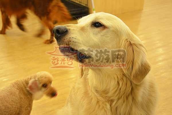 韩国BAU House爱犬咖啡厅4