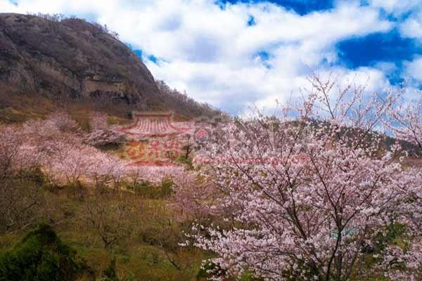 韩国木浦儒达山雕刻公园11