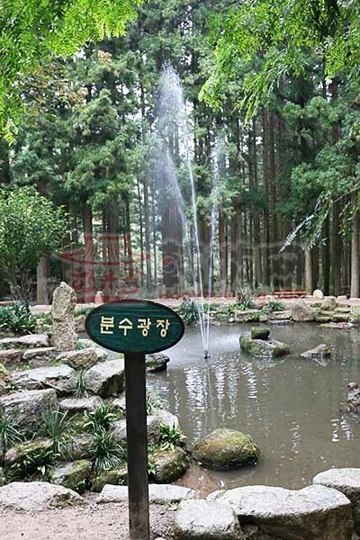 全罗南道的宝城绿茶田园9