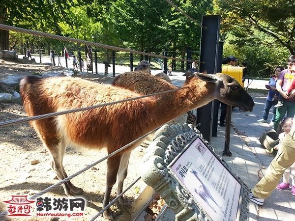 韩国首尔大公园10