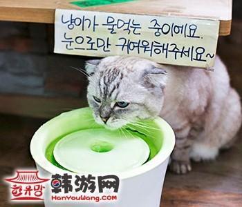 韩国明洞喵咪咖啡厅