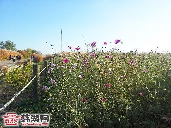 韩国蓝天公园7