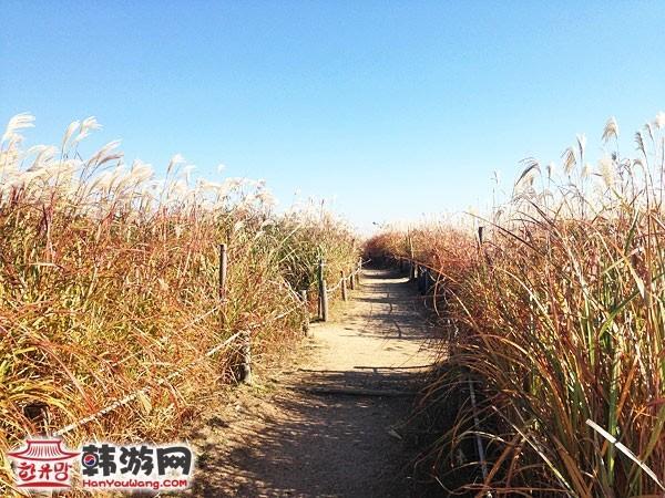 韩国蓝天公园23