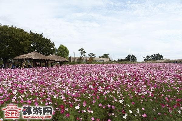 韩国蓝天公园16