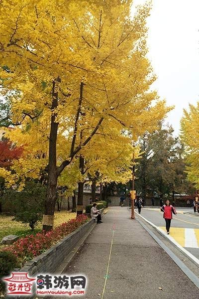 韩国大学路