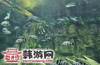 63-韩华水族馆一山