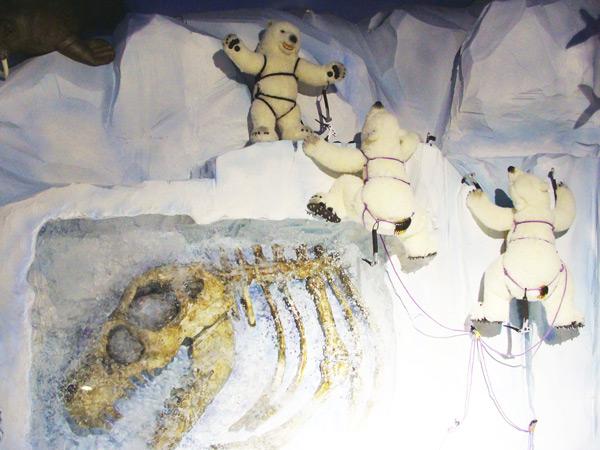 庆州泰迪熊博物馆海洋馆四