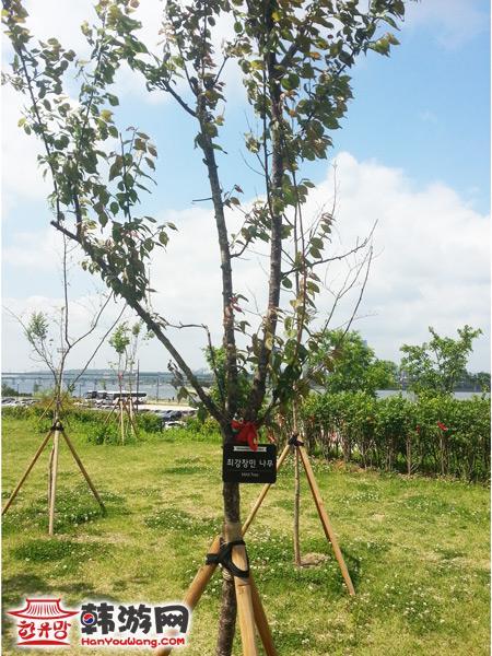 首尔汝矣岛明星树林_韩国景点_韩游网