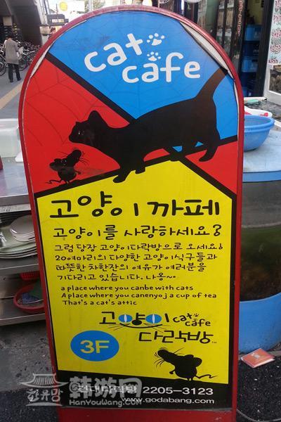 建大Cat Cafe猫咪咖啡_韩国美食_韩游网