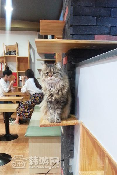 建大cat cafe猫咪咖啡