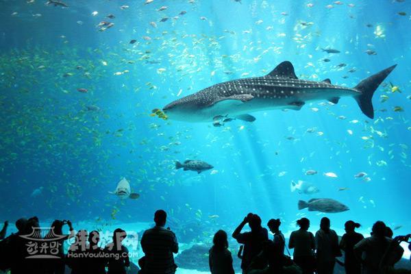 阔的海洋生态系统