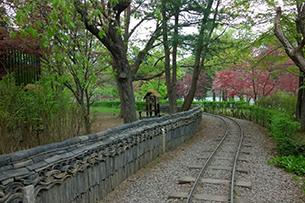京畿道晨靜樹木園+南怡島+免稅店09