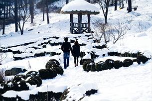 京畿道晨静树木园+南怡岛+免税店05