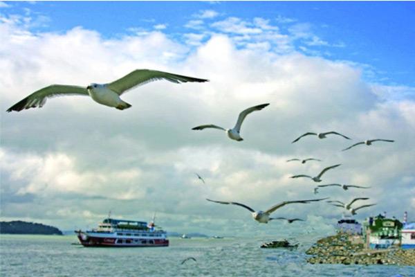 一张很多动物跑向船的图