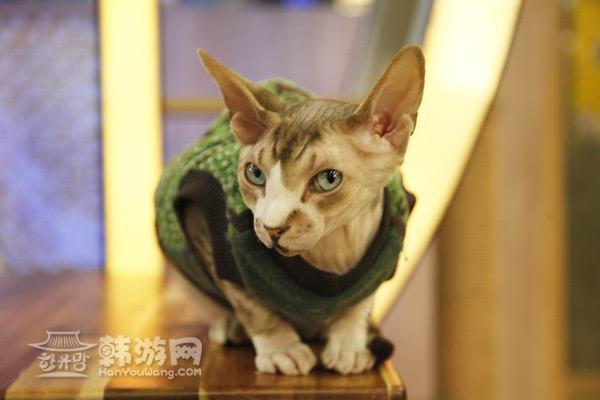 地址:首尔市中 明洞8路8-5(明洞2街,明洞大厦6层)  8 8-5 (2, 6) 在首尔有很多主题类的咖啡馆,其中猫咪咖啡厅就很受爱宠物人士推崇。作为一家猫咪咖啡店,咖啡并不是主题,那种类各异、造型独特且可爱、萌太十足的喵星人才是这家店的特色招牌。倘若你和朋友刚好都是猫咪控,那么不得不推荐在首尔明洞的猫咪咖啡厅里狠狠地泡一下午,你可以优雅地跟服务员说:来杯卡布奇诺,外加一只猫咪,和喵咪们共度一段愉快的时光吧。       优惠券: