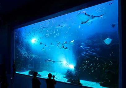 一山韩华Aqua planet水族馆(水上星球)门票在线预订_韩游网
