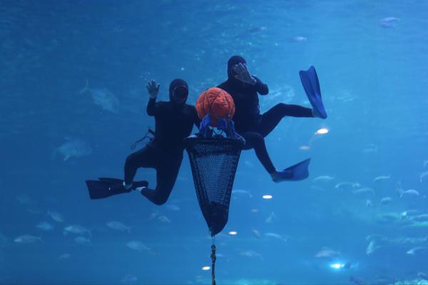 济州Aqua planet水族馆01
