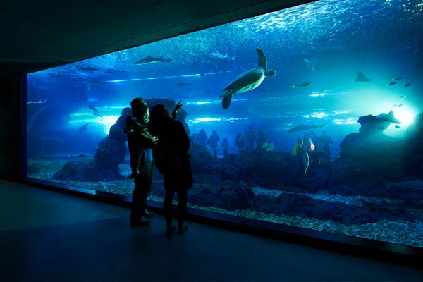 济州Aqua planet水族馆02