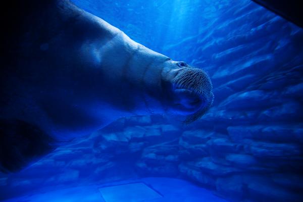 济州Aqua planet水族馆04