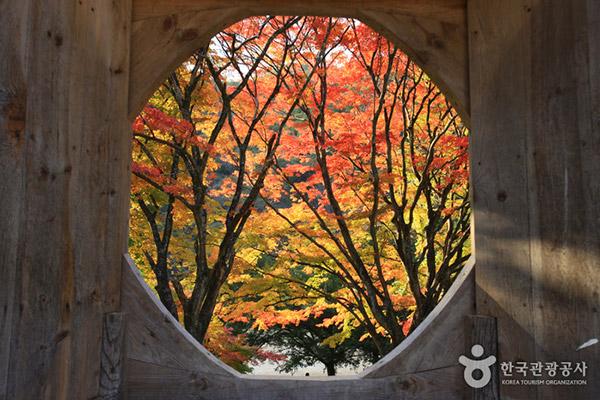 韩国枫叶大赏游览地点5