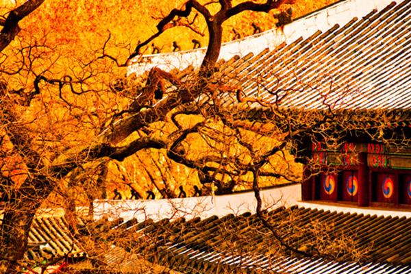 韩国枫叶大赏游览地点10