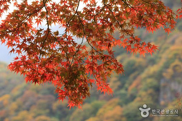 韩国枫叶大赏游览地点6