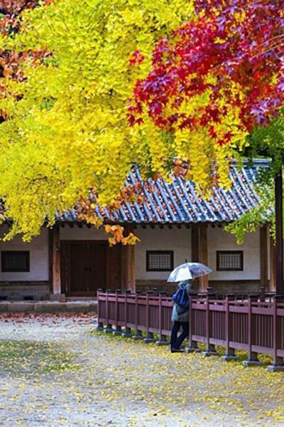 韩国枫叶大赏游览地点15