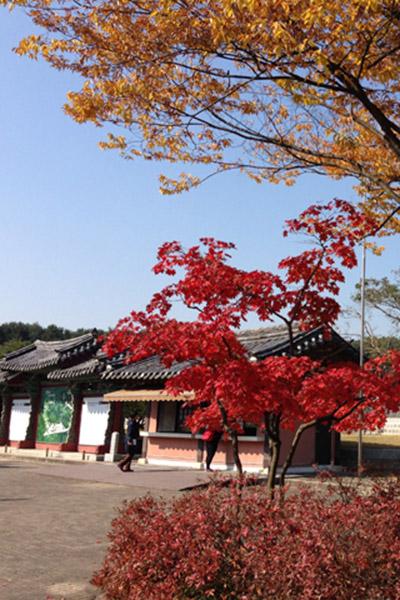 韩国枫叶大赏游览地点19