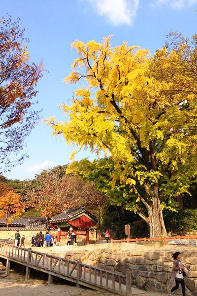 韩国枫叶大赏游览地点21