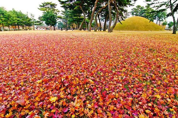 韩国枫叶大赏游览地点23