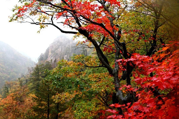 韩国枫叶大赏游览地点27
