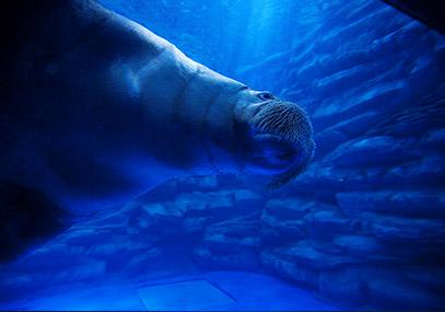 济州Aqua planet水族馆(水上星球)门票在线预订优惠-韩游网