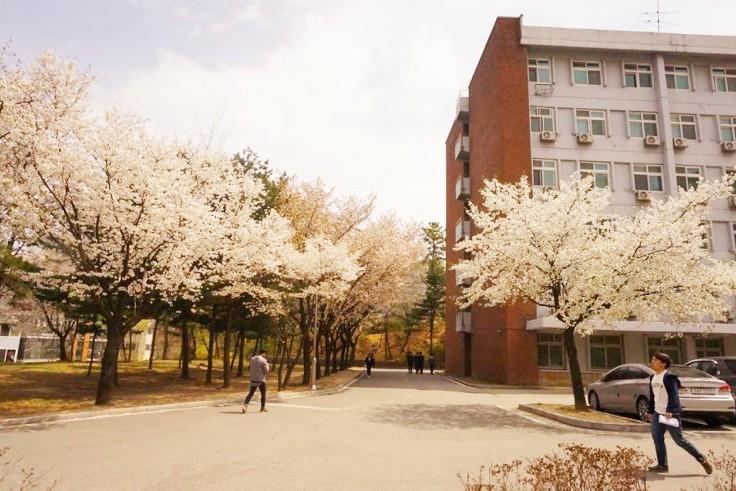 2016春天最美大学首尔地区BEST5 15