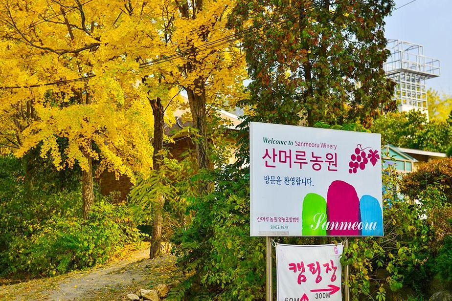 京畿道坡州山葡萄农园_韩国景点_韩游网