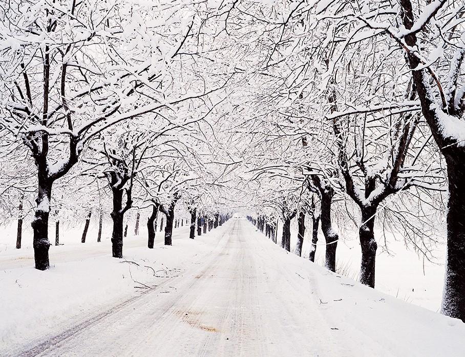 가로수(겨울).jpg