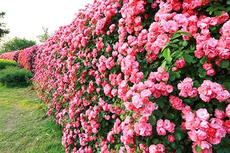 春-(1).jpg