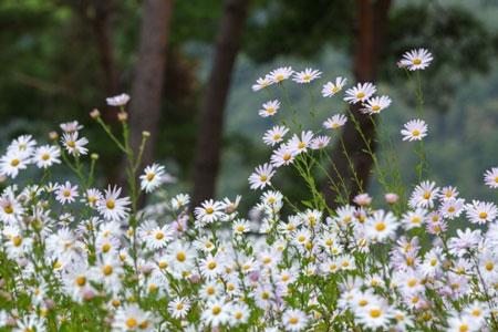菊花公园-(3).jpg