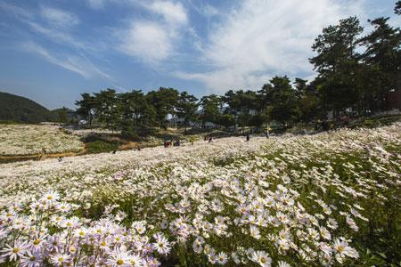 菊花公园-(4).jpg