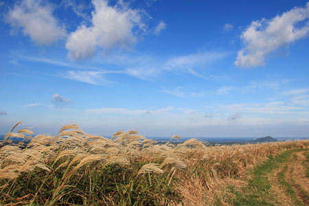 济州岛1.jpg