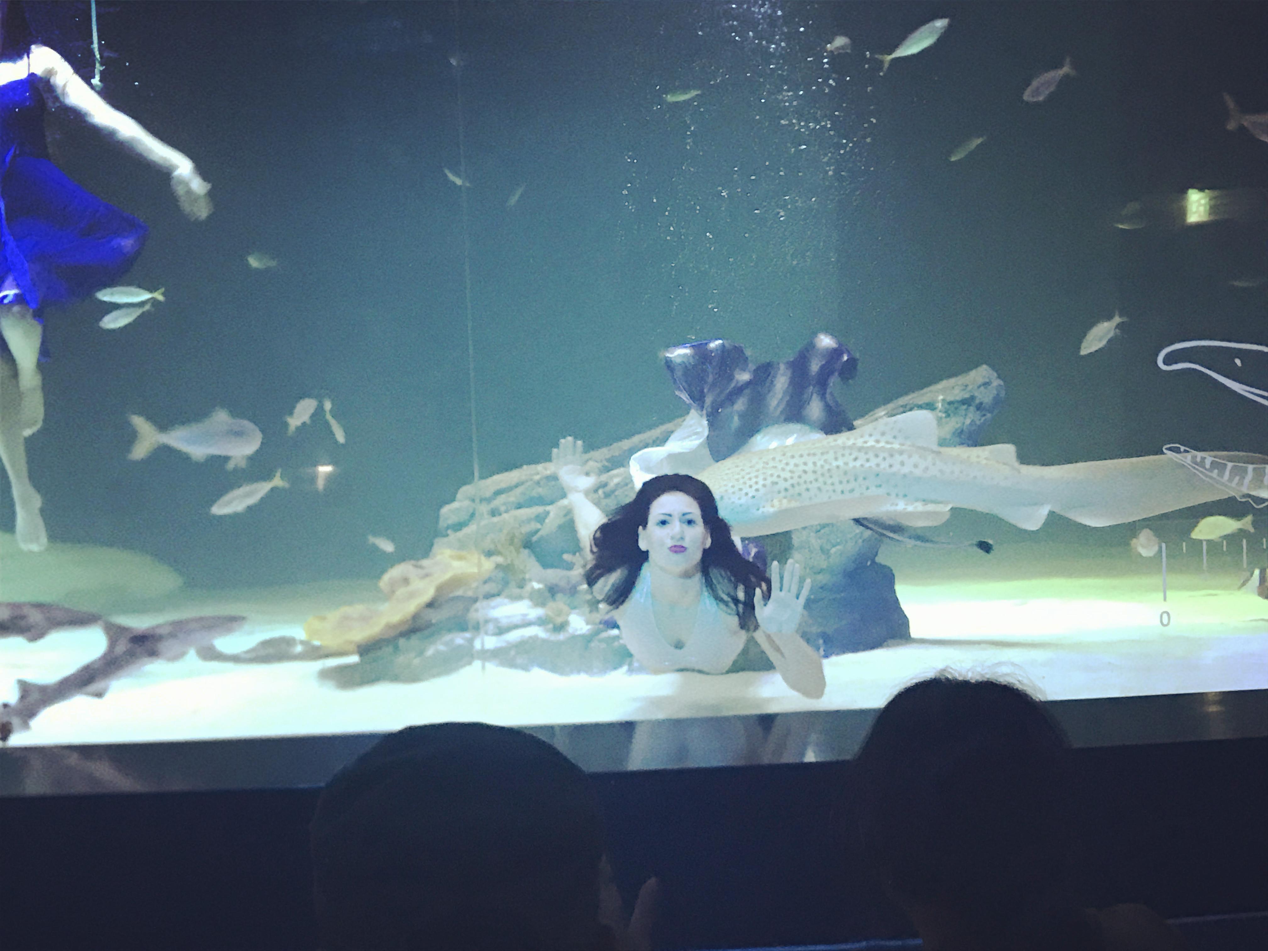 水族馆 (1).JPG