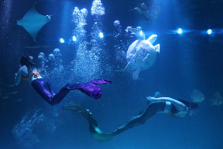 蓝色大海的美人鱼.jpg