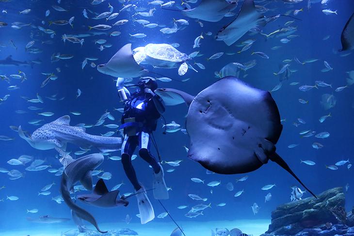 海底朋友喂食秀.jpg