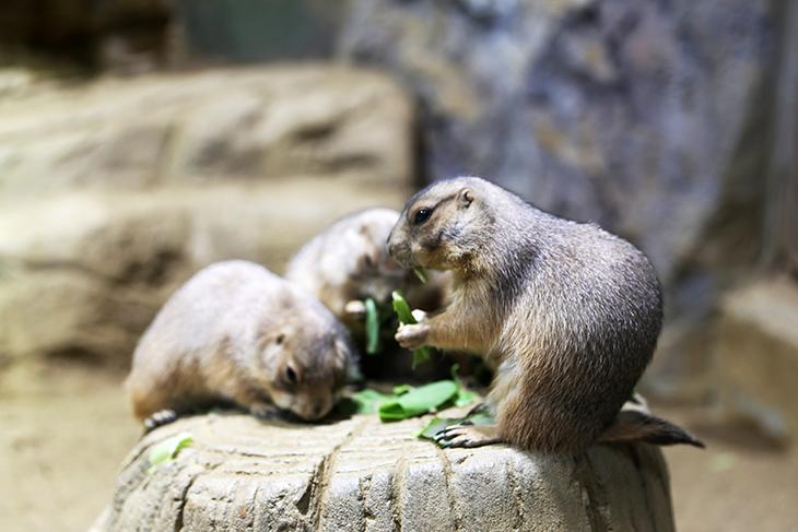 土拨鼠喂食体验.jpg