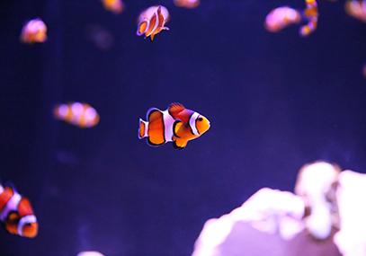 大邱ALIVE水族馆_在线预订_韩游网