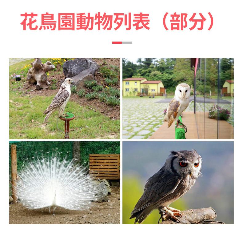 花鳥園繁_03.jpg